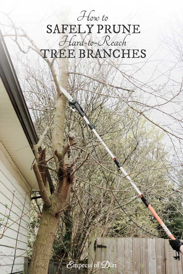 How to safely prune and trim hard-to-reach tree branches without a ladder.
