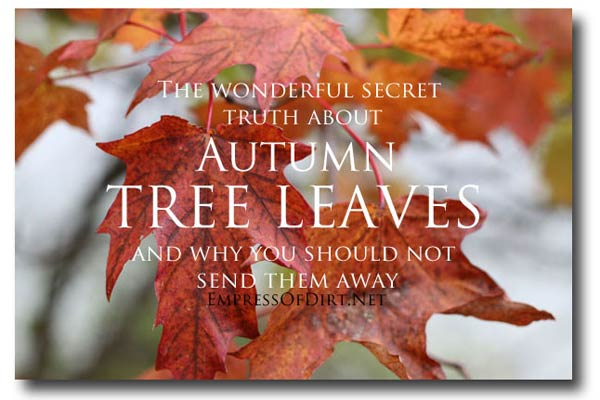 The wonderful, secret truth about autumn tree leaves and why you should not send them away.
