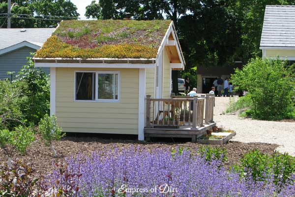 Garden shed with sedum roof.