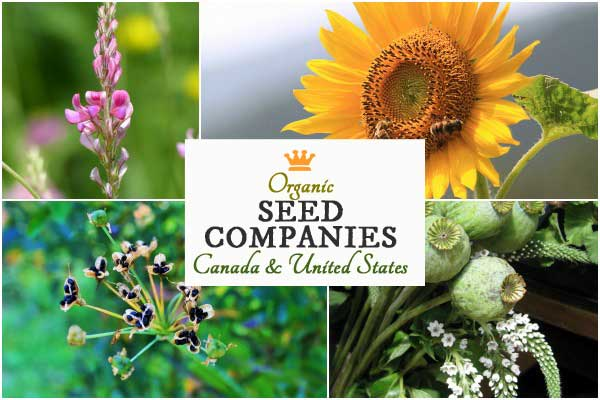Seed Companies in Canada and the United States