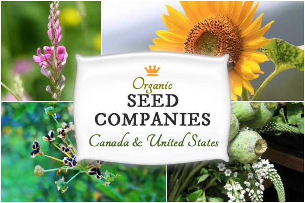 Organic Seed Companies in Canada and the United States