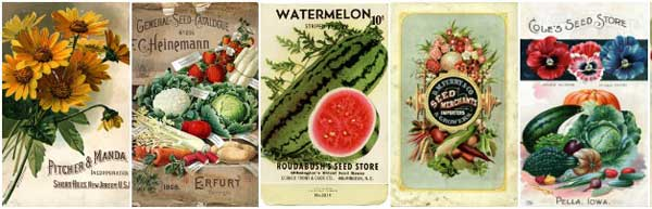 Vintage seed packet and catalogue covers make wonderful print art for gardeners