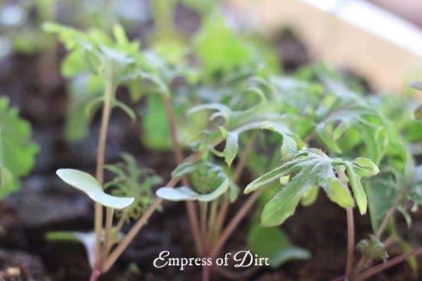 Plant seedlings.