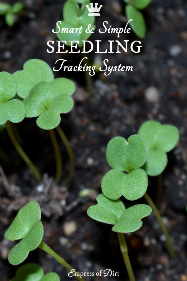 This seedling tracking system keeps track of all of your indoor seed sowing without the need for tags or markers for each plant.