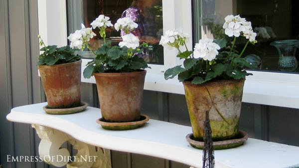 Sometimes simple is best! These old-weathered clay pots and saucers with white geraniums look perfect on the garden shelf.