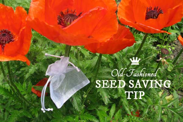 Smart seed saving tip for spring to fall