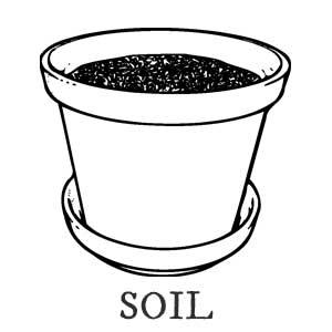Soil in flower pot