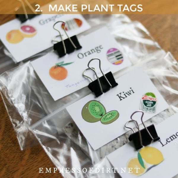 Plastic bags labelled with citrus fruit names with seeds germinating inside.
