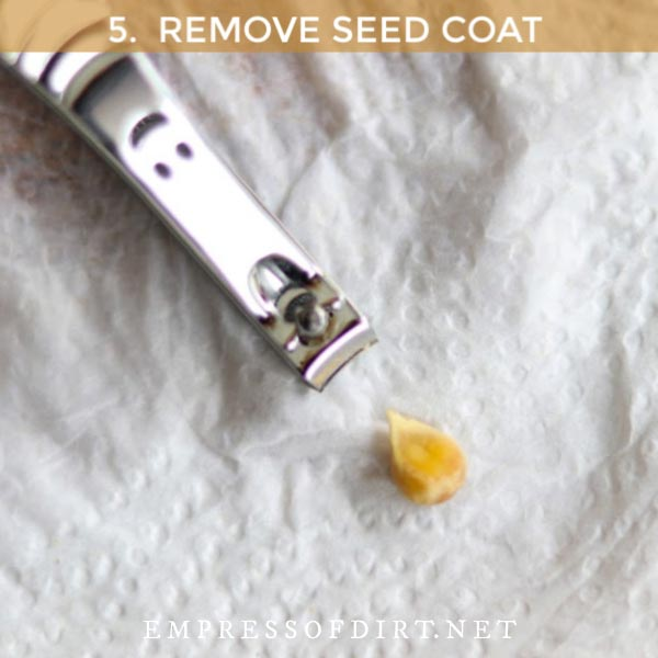 Nail clippers and a citrus seed.