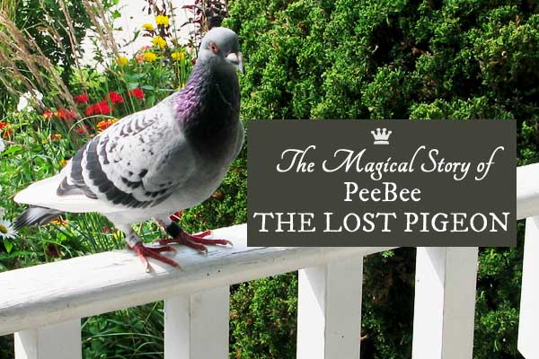 One day we came home to find a homing pigeon waiting at our front door. This is the story of his voluntary stay with us during that summer.