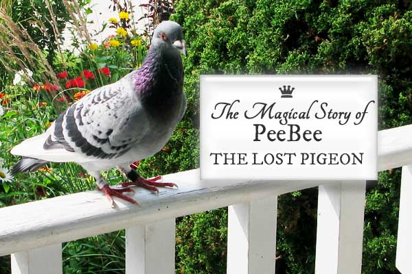 The magical story of PeeBee the lost pigeon