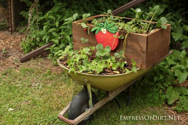 DIY Rolling Strawberry Wheelbarrow Planter