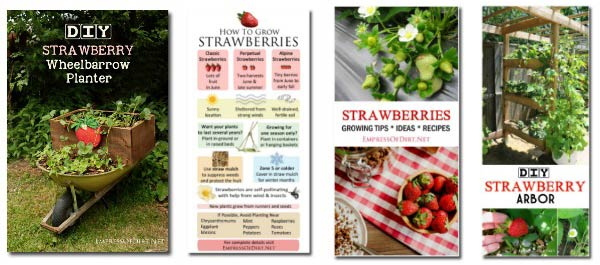 Tips and DIY planters for growing strawberries in the home garden.