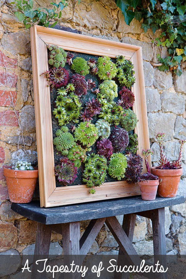 Succulent frame on fence