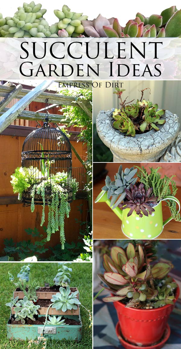 Ideas for using succulents in the garden creatively.
