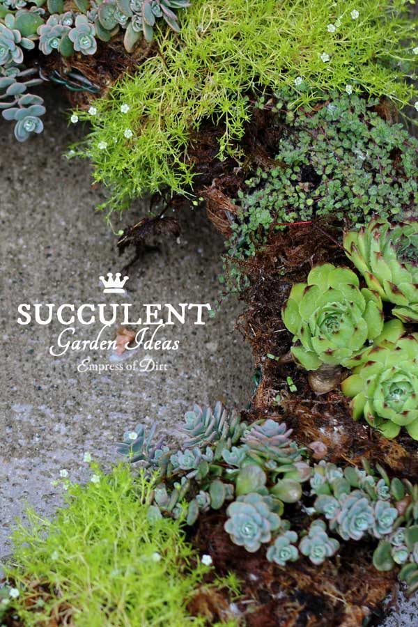 Best Way To Plant Succulents