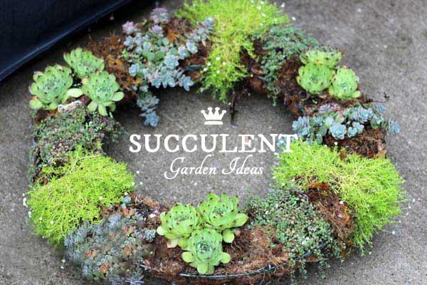 DIY Succulent Garden Art Ideas