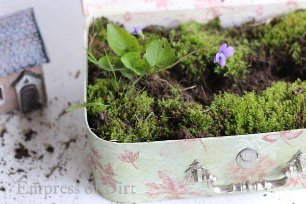 Purple flowering violet in suitcase fairy garden.