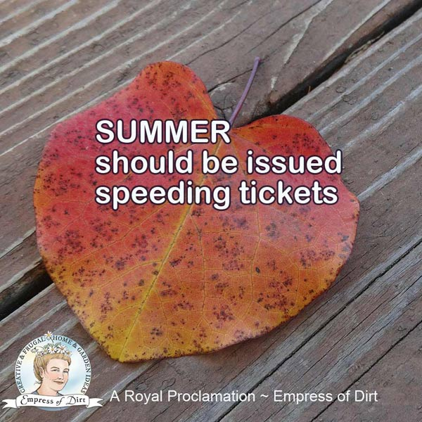 Summer should be issued speeding tickets.