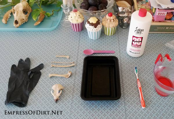 Supplies for cleaning bones | The tutorial shows how to clean animal bones (free of soft tissue) to prepare them for display in a collection. This is suitable for homeschoolers and others who wish to keep common animal bones for a collection or display.