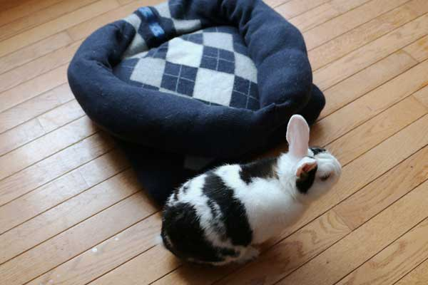 sweater-pet-bed-h1