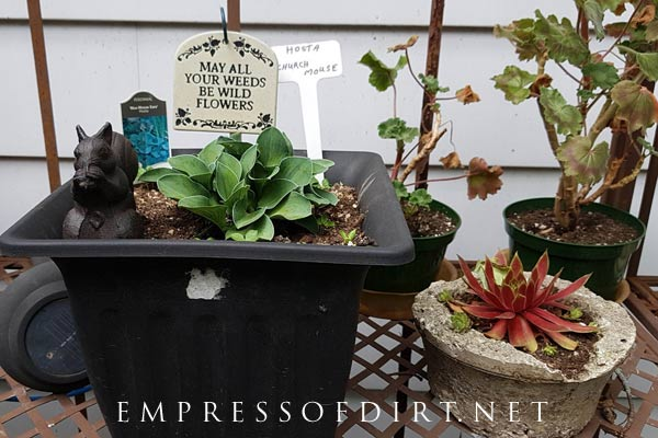 Display your plants in a collection on an outdoor table.