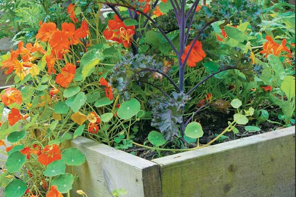 How To Create An Edible Landscape