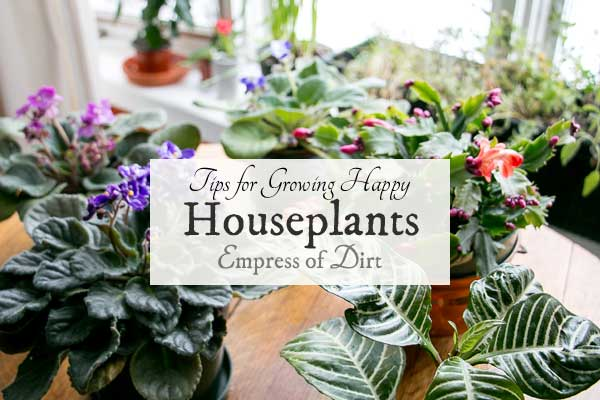 Tips for growing happy houseplants