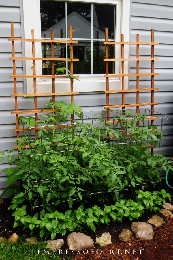 Tomato cages and supports help prevent damage to the plants.
