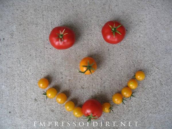 Happy freshly-picked tomatoes.