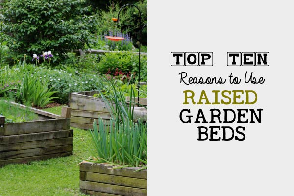 Top Ten reasons to use raised beds in your home garden.