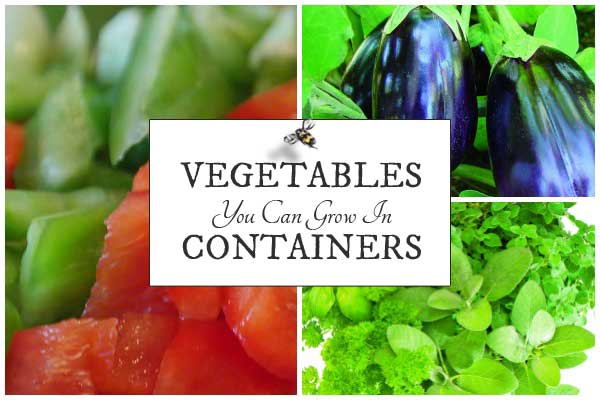 Vegetables you can grow in containers in your home garden.