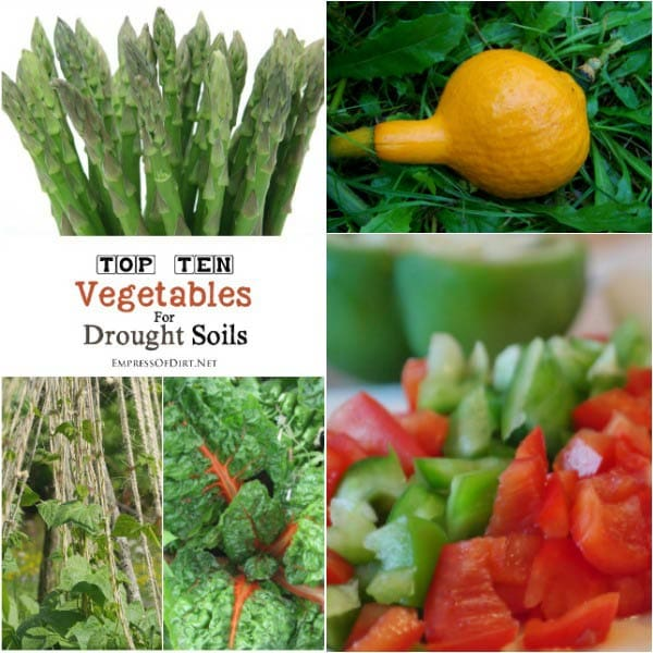 Drought soil conditions can be very challenging for vegetable growing. This list from High-Value Veggies shows which edible crops do best in drought conditions as well as things you can do to give your soil a boost.