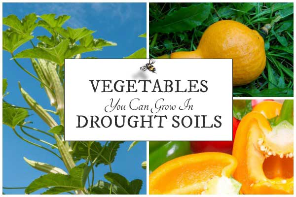 Vegetables you can grow in drought soil conditions according to High Value Veggies.