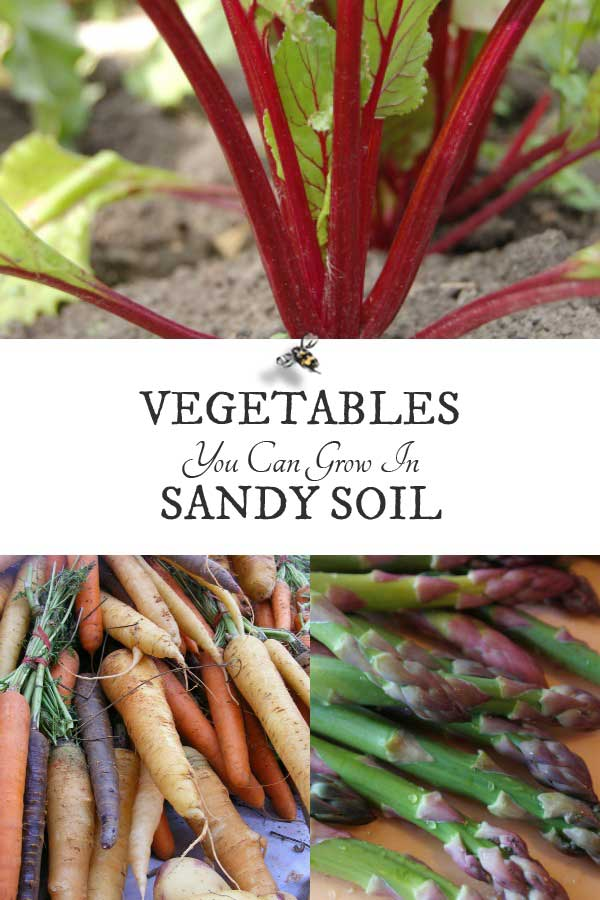 10 Best Vegetables for Sandy Soils - Empress of Dirt