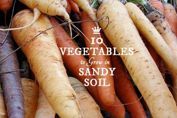 10 Best Vegetables For Sandy Soils Empress Of Dirt