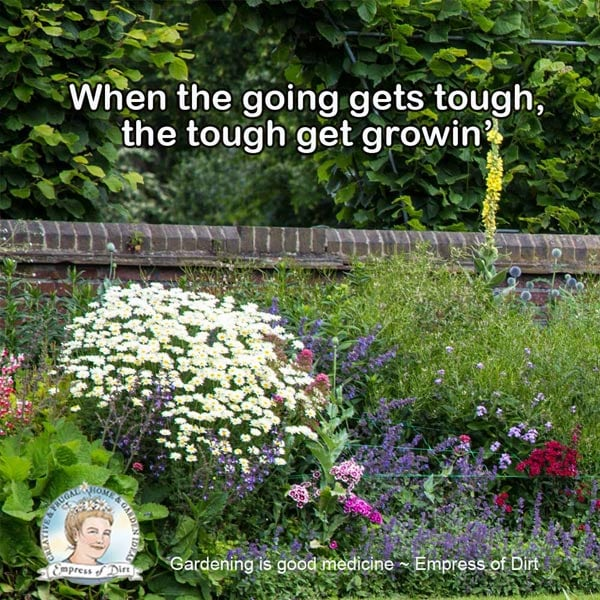 When the going gets tough, the tough get growin'.