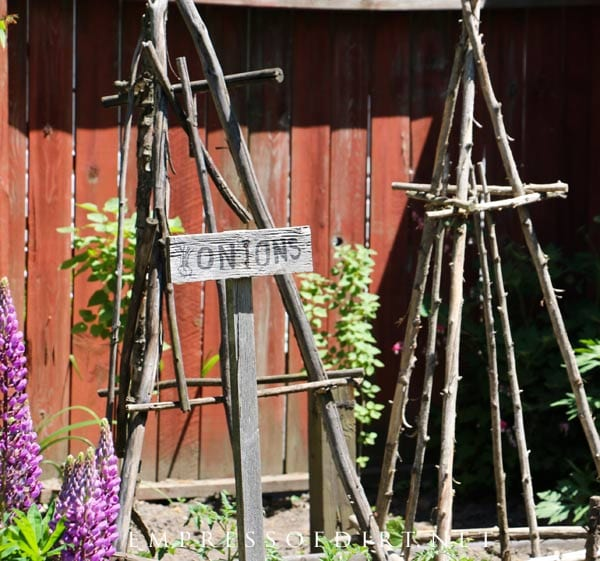Veggie garden obelisks made from old tree branches. Perfect for climbing vines.