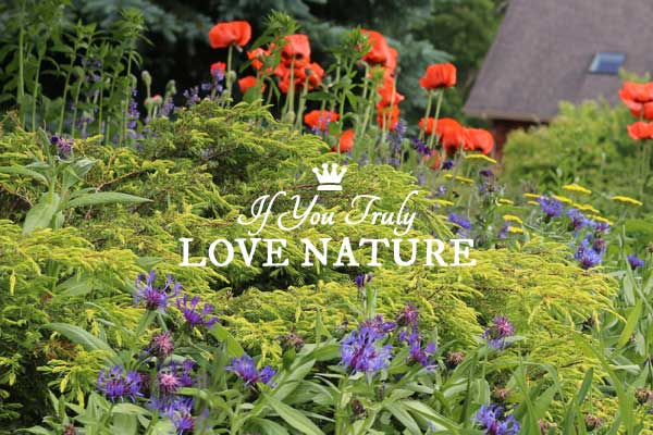 If You Truly Love Nature…