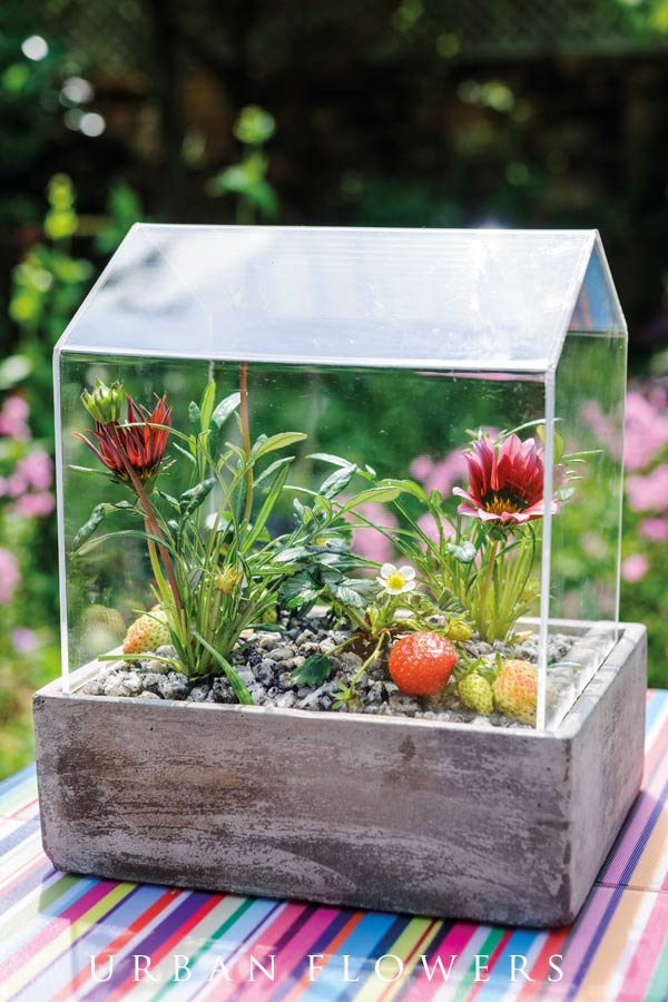 Make your own tabletop miniature terrarium with these step-by-step instructions.