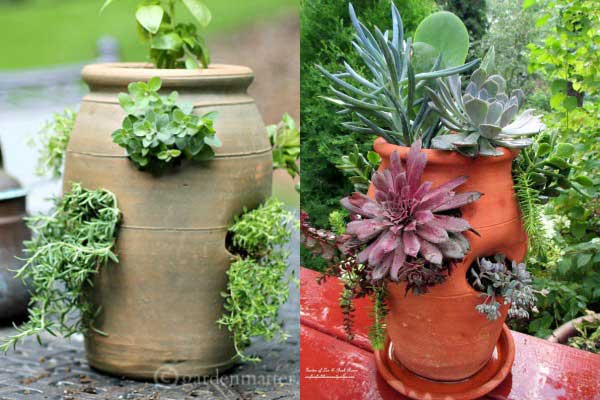 Strawberry pots are not just for strawberries! Try herbs, annuals, and more.