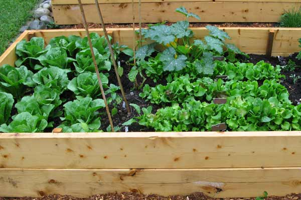 5 Things I Learned By Giving My Kids Their Very Own ... |Vegetable Garden Screen