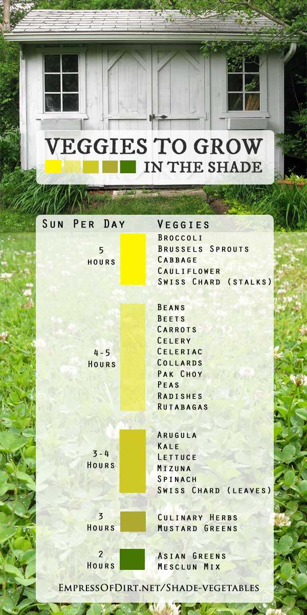 vegetables you can grow in the shade - Vegetable Garden Ideas For Shaded Areas