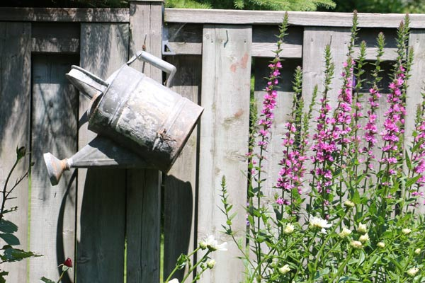 Old watering can hanging on fence.