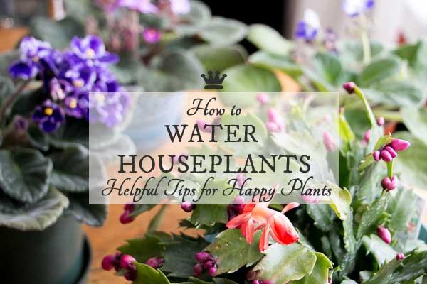 How Often Should I Water My Houseplants?