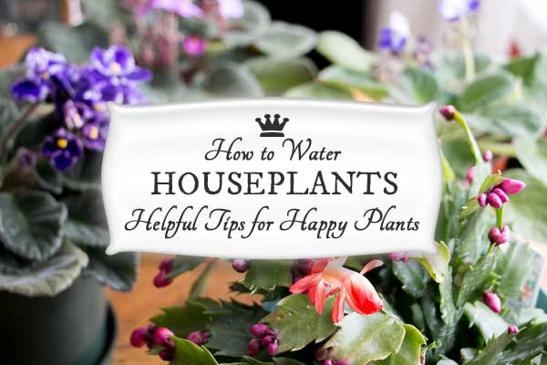 How often should you water your houseplants? See how one woman keeps her plants happy and healthy.