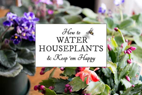 How Often Should I Water My Houseplants?