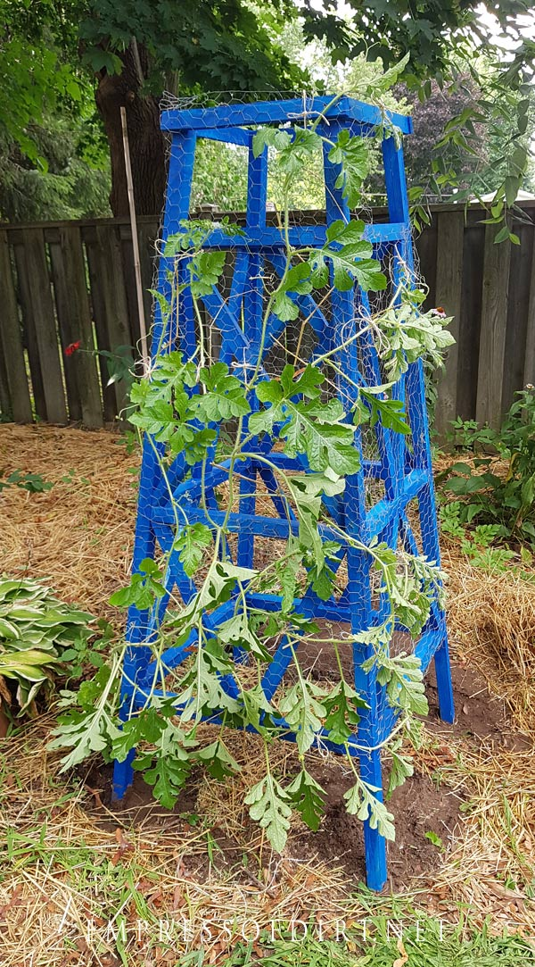 Strong wood obelisks are perfect for heavy vines like watermelon.