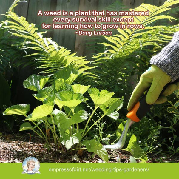 A weed is a plant that has mastered every skill except for learning how to grow in rows.