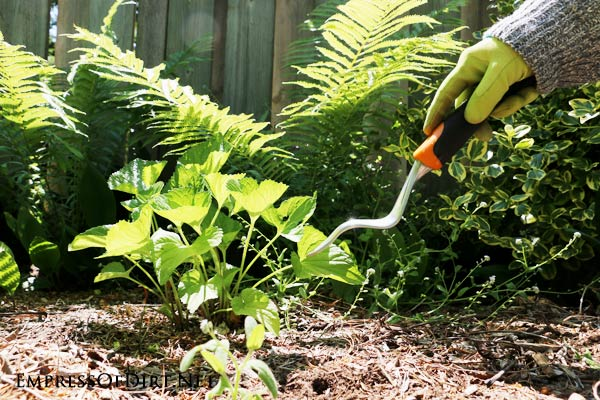 These 7 weeding tips that every gardener should know provide the basics so you can stay ahead of the weeds and keep your garden in good shape. Learn about the importance of timing, rain, and the right tools.